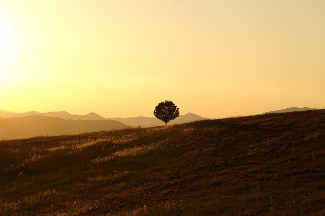 image of a solitary tree